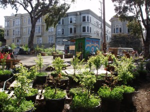 Urban agriculture: let a thousand flowers bloom
